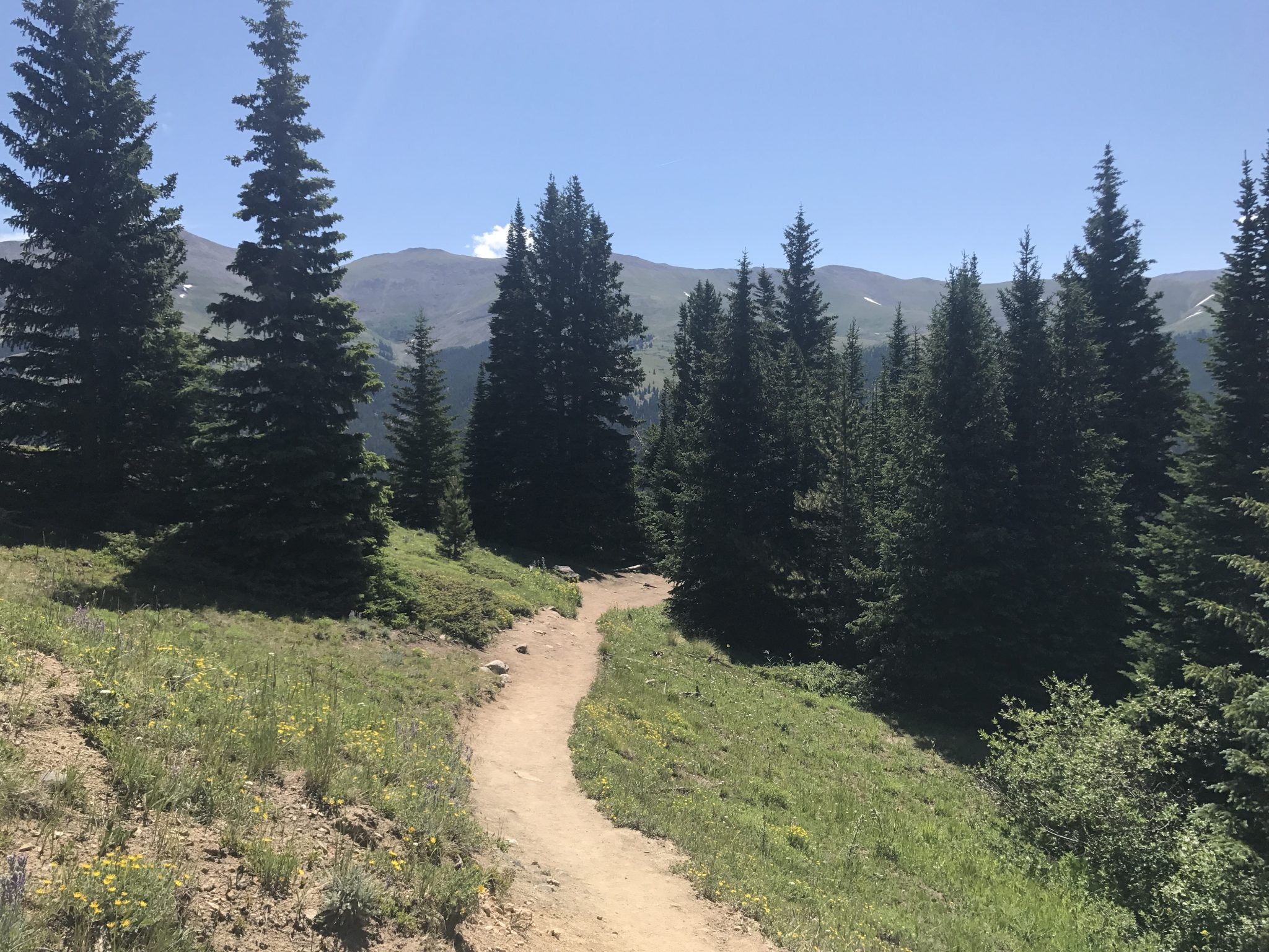 Quandary Peak Trail above the treeline