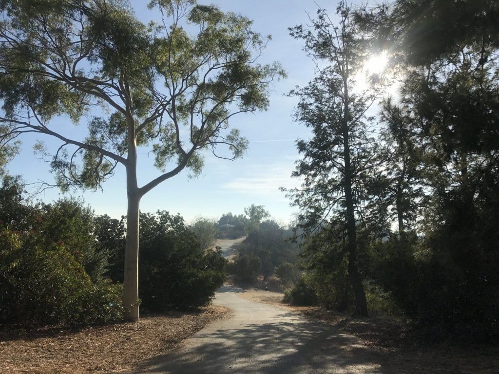 ernest e debs regional park trees