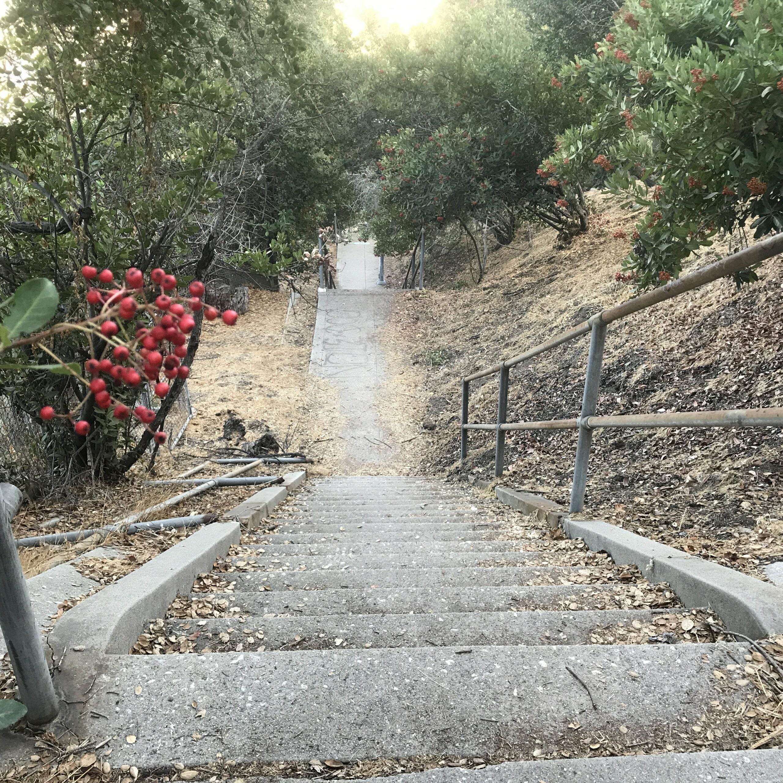ernest e debs regional park stairs
