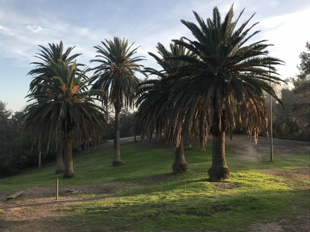 ernest e debs regional park palm trees