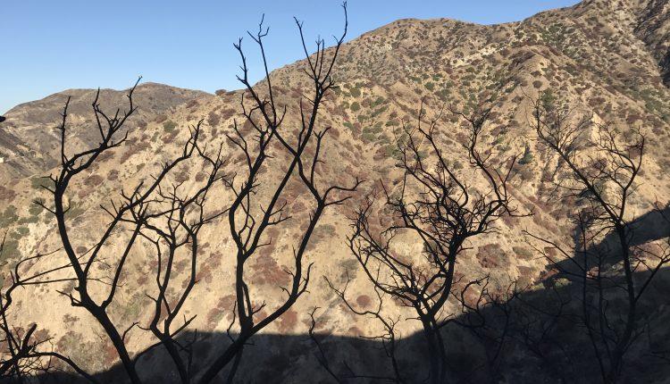 Wildwood Canyon Fire Damage