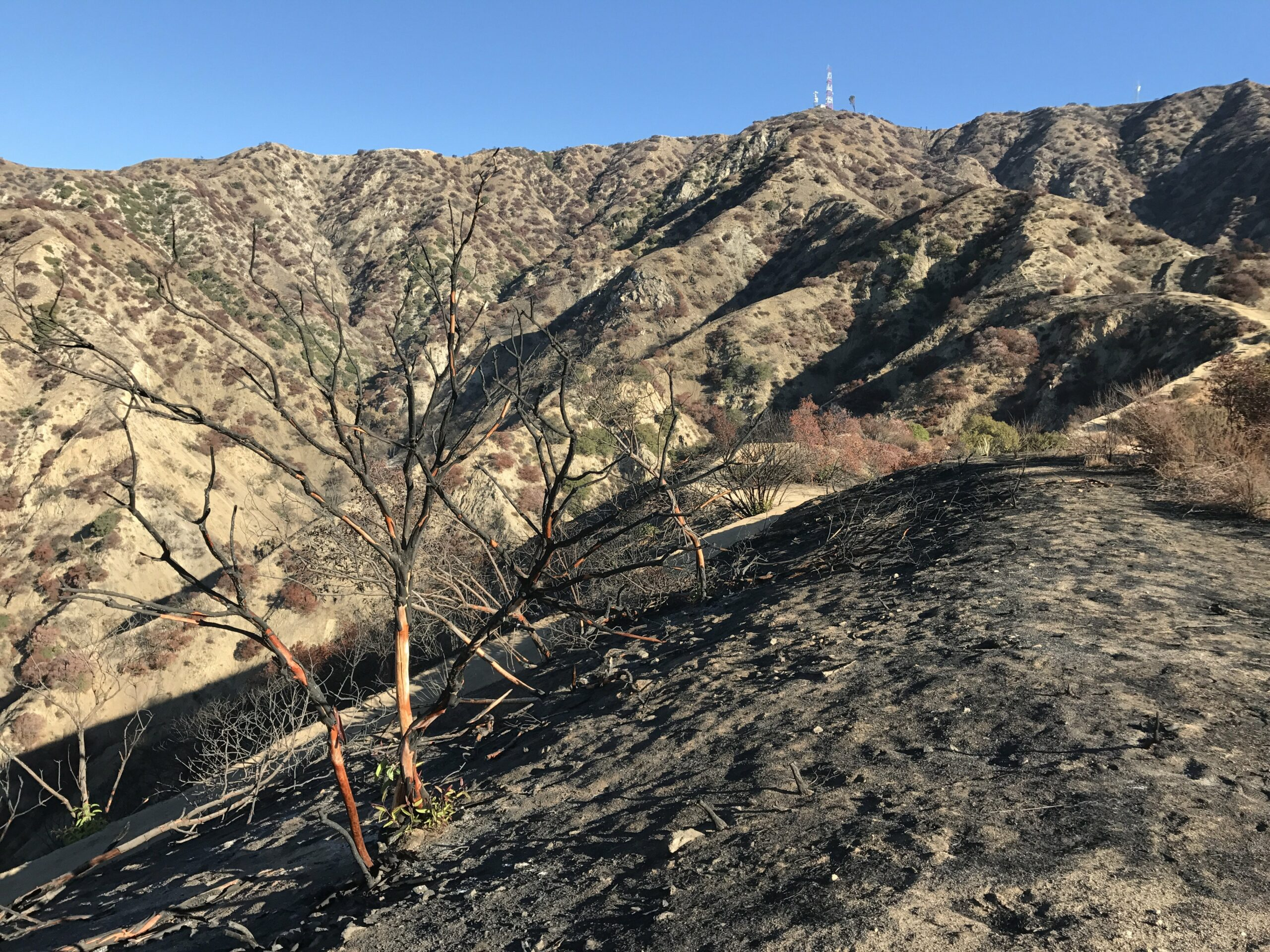 wildwood canyon trail fire damage