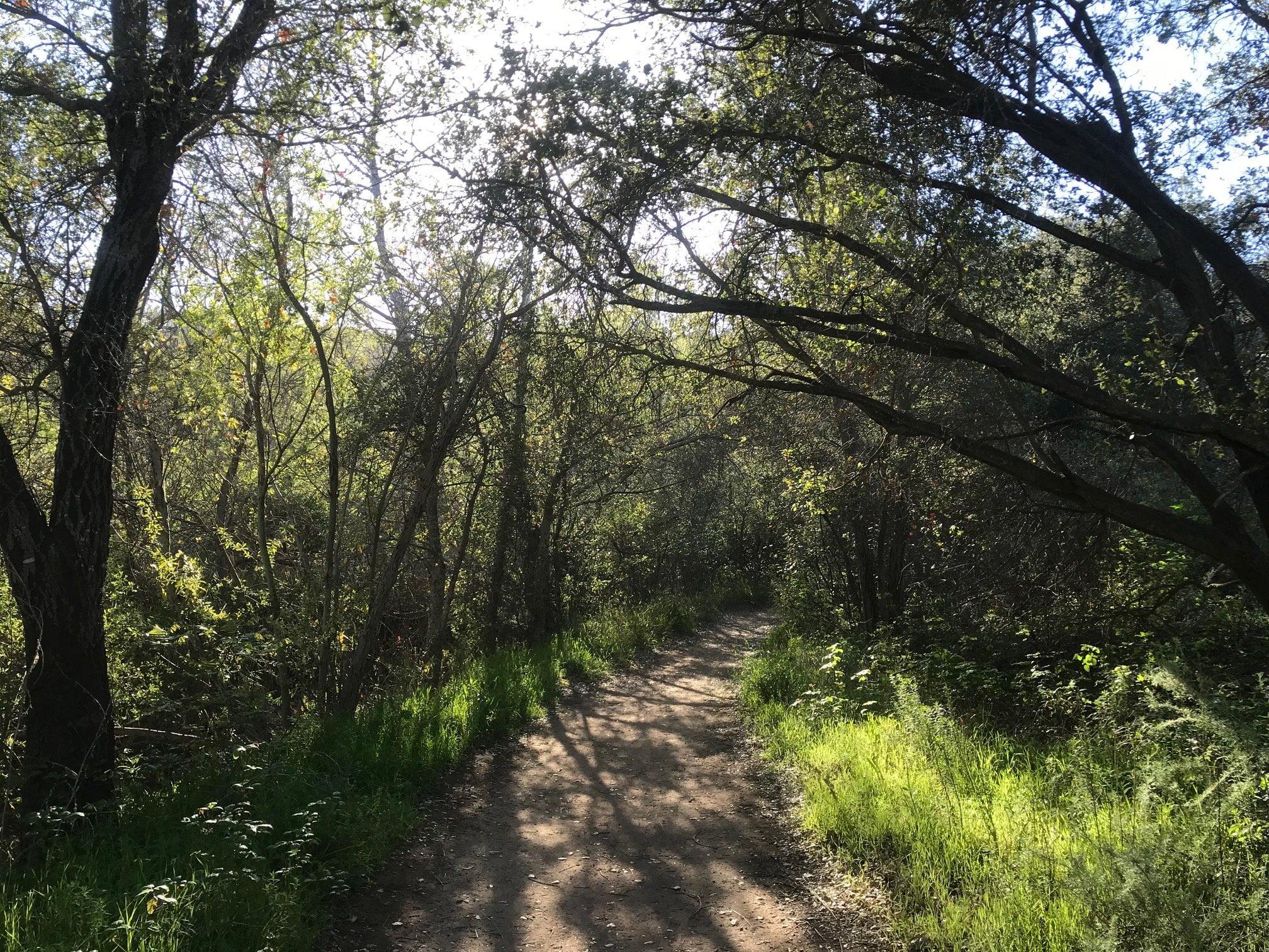 Escondido Falls trail