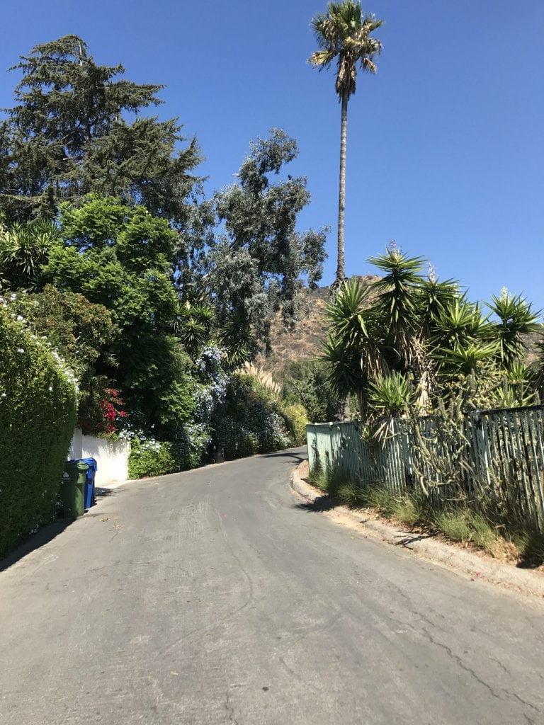 Wisdom Tree Hike