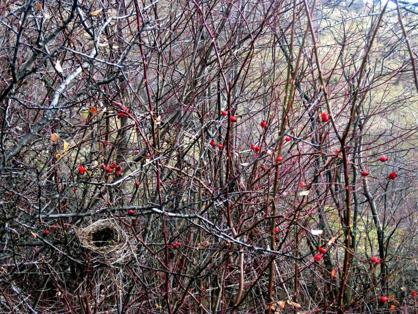 hiking in bosnia wildlife