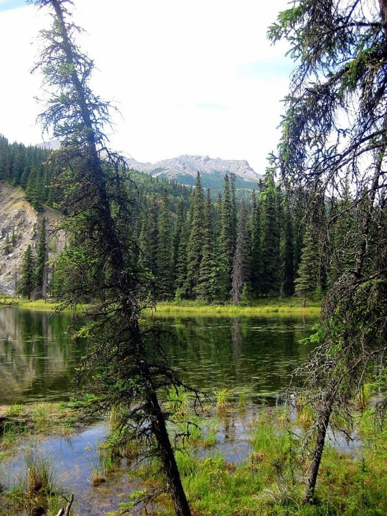 Horseshoe Lake Denali National Park, Alaska