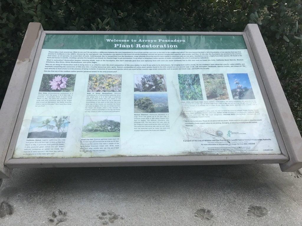 Plants of Arroyo Pescadero Trail