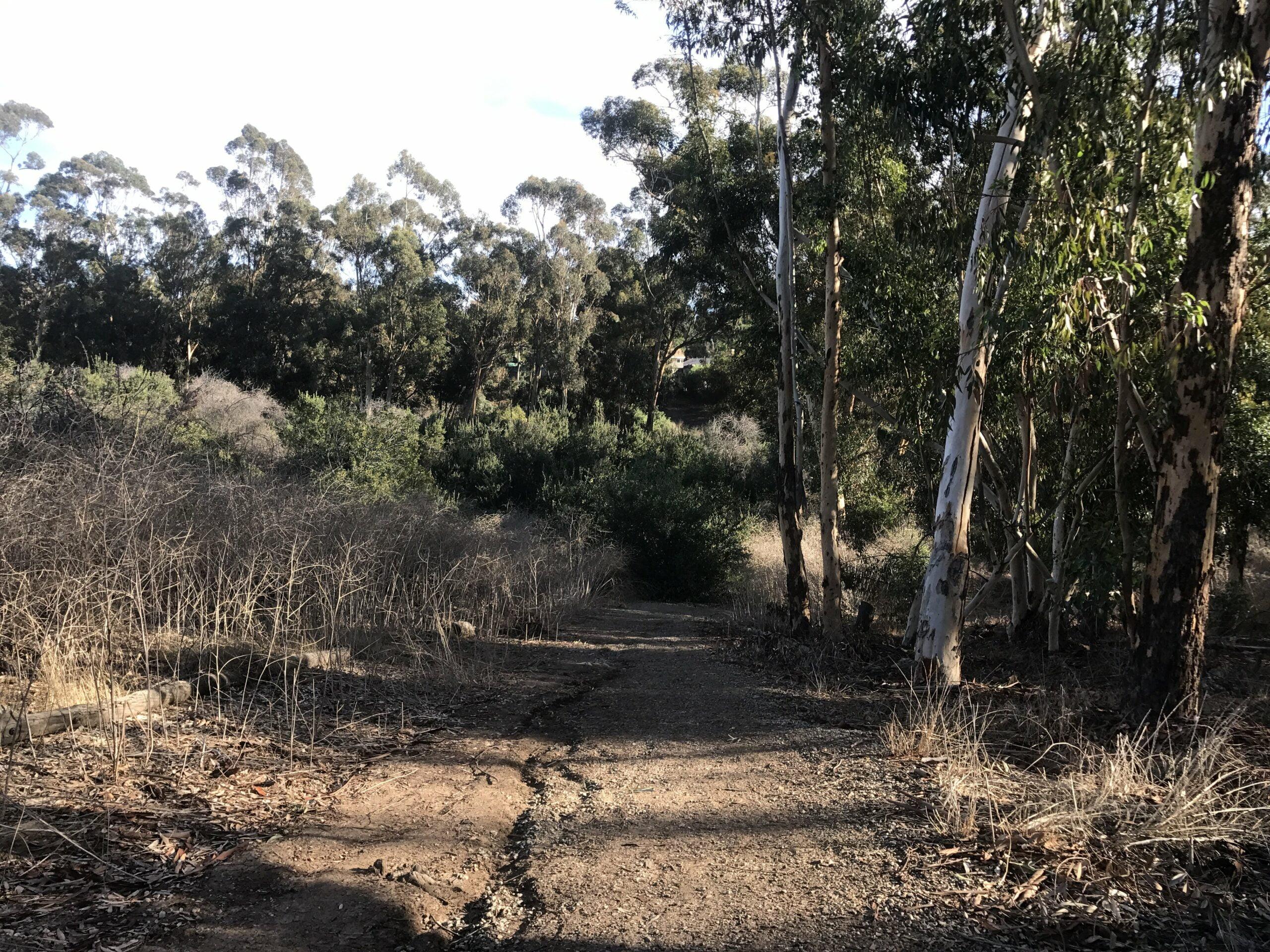 deer loop trail