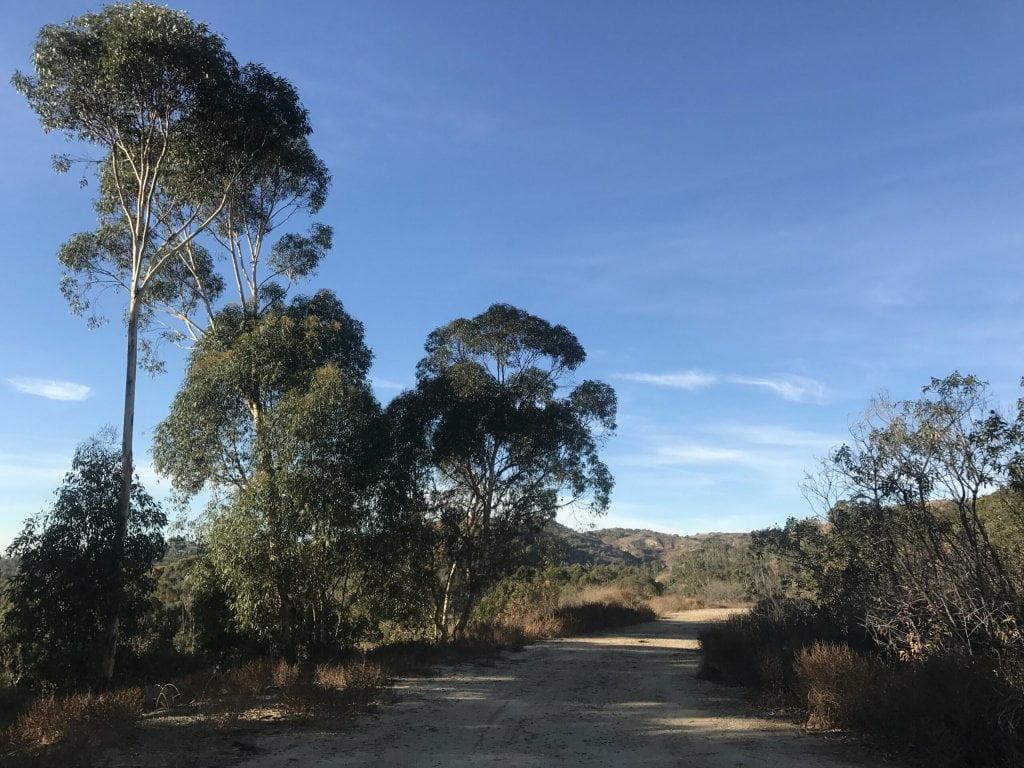 Arroyo Pescadero trail trees