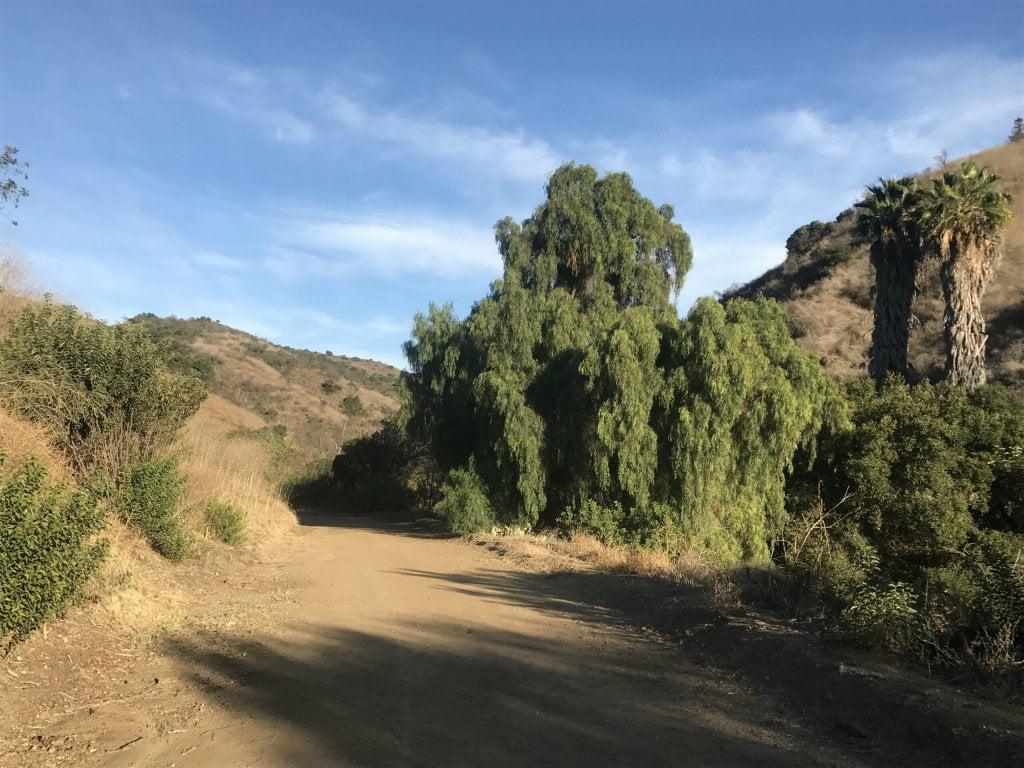 Arroyo San Miguel Trail trees