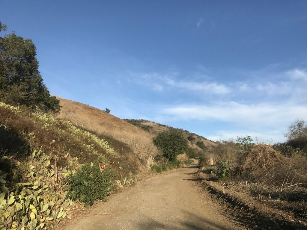 Arroyo San Miguel Trail cactus patch