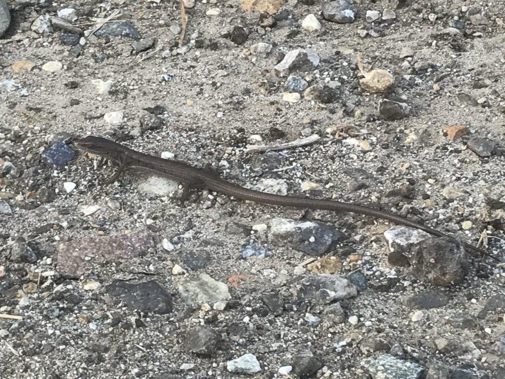 Arroyo San Miguel Trail wildlife