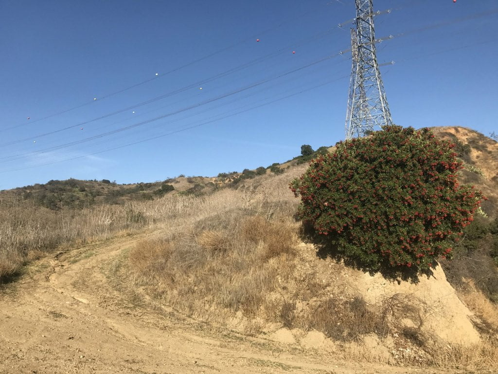 Turnbull Canyon Trail