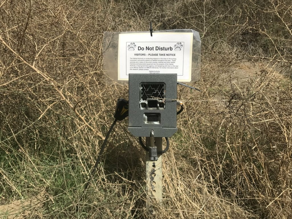 Turnbull Canyon sumac trail wildlife camera
