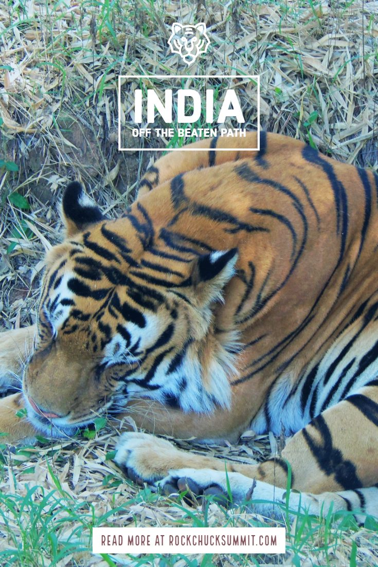 Off the beaten path India - Visit Tigers