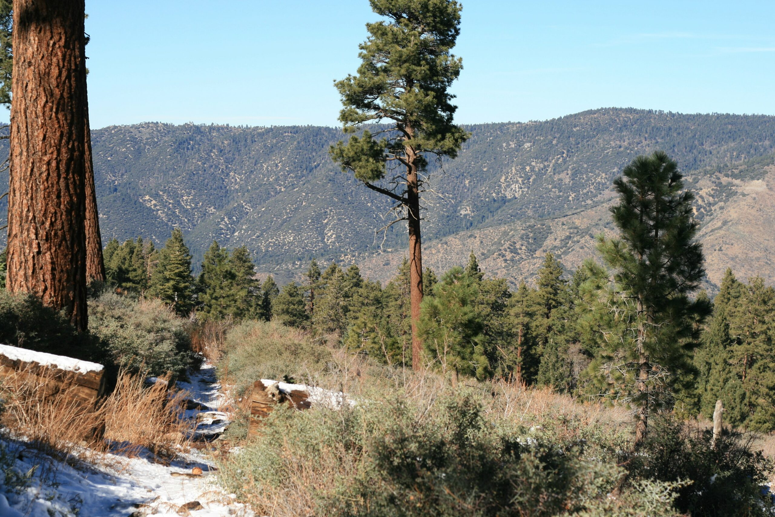 San Gorgonio South Fork Trail