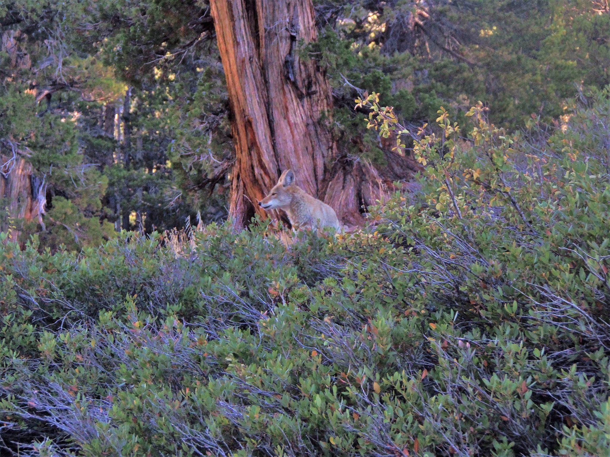 Eastern Sierras hiking
