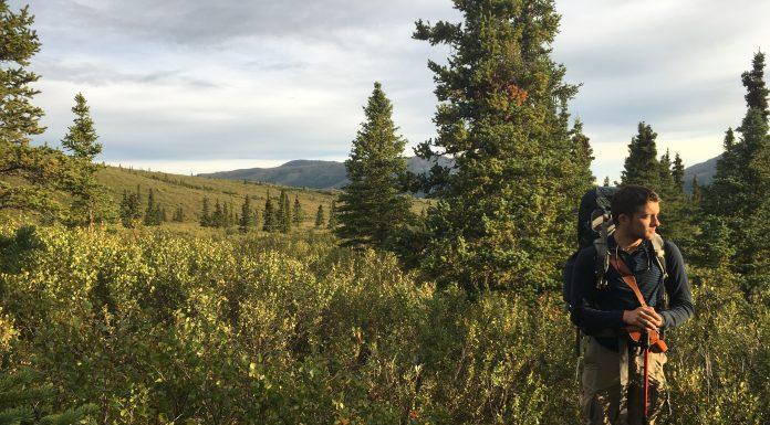 Golden Hour - Savage River Denali Alaska