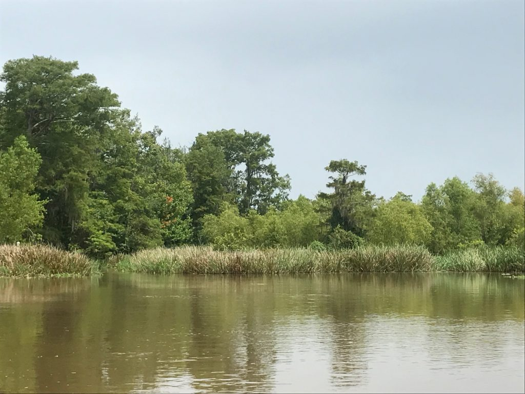 honey island alligator swamps