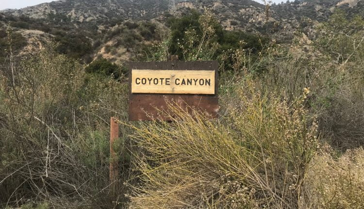 cayote canyon