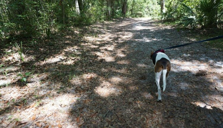 The Timucuan Ecological and Historical Preserve