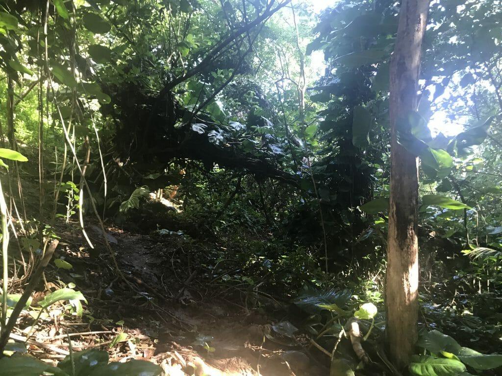Queens Bath Trail