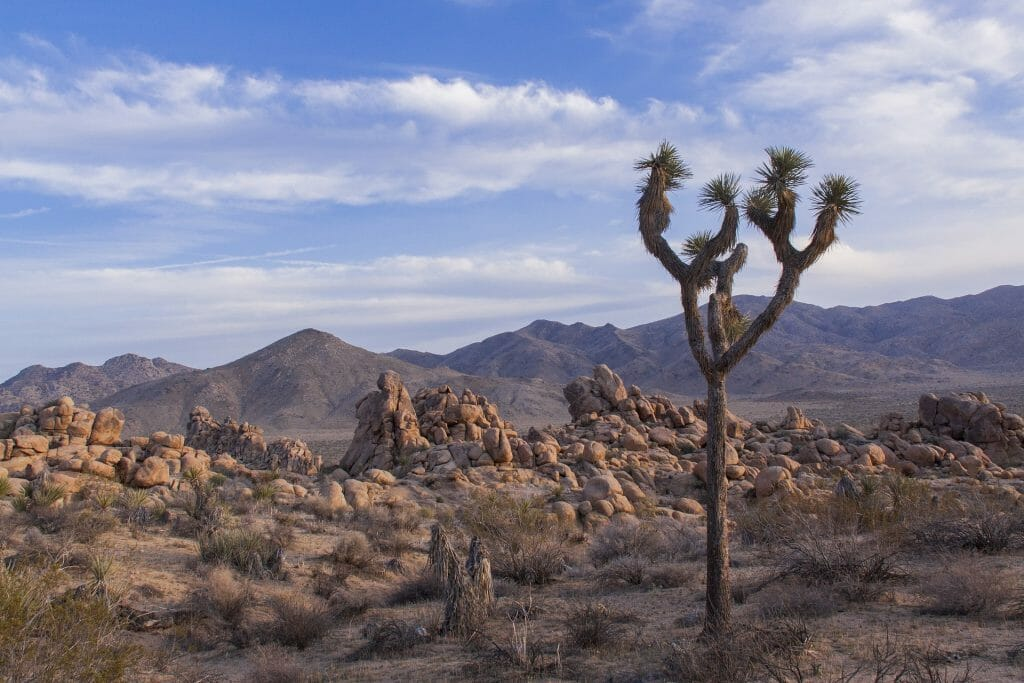Best National Parks - Joshua Tree Park
