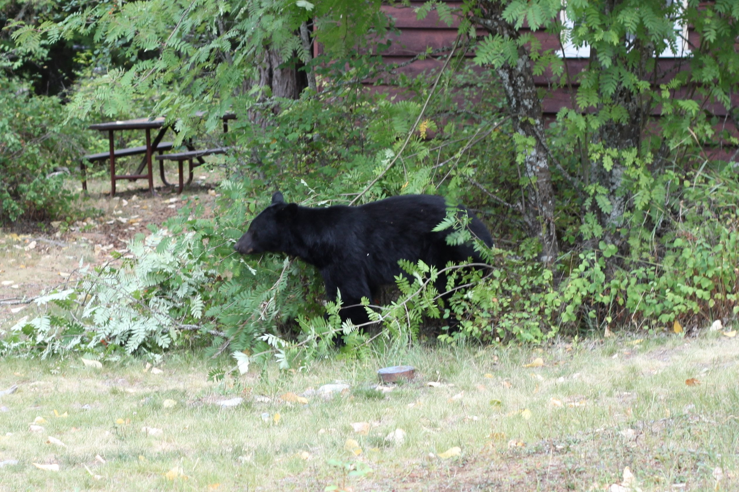 Black Bear Glacier National Park