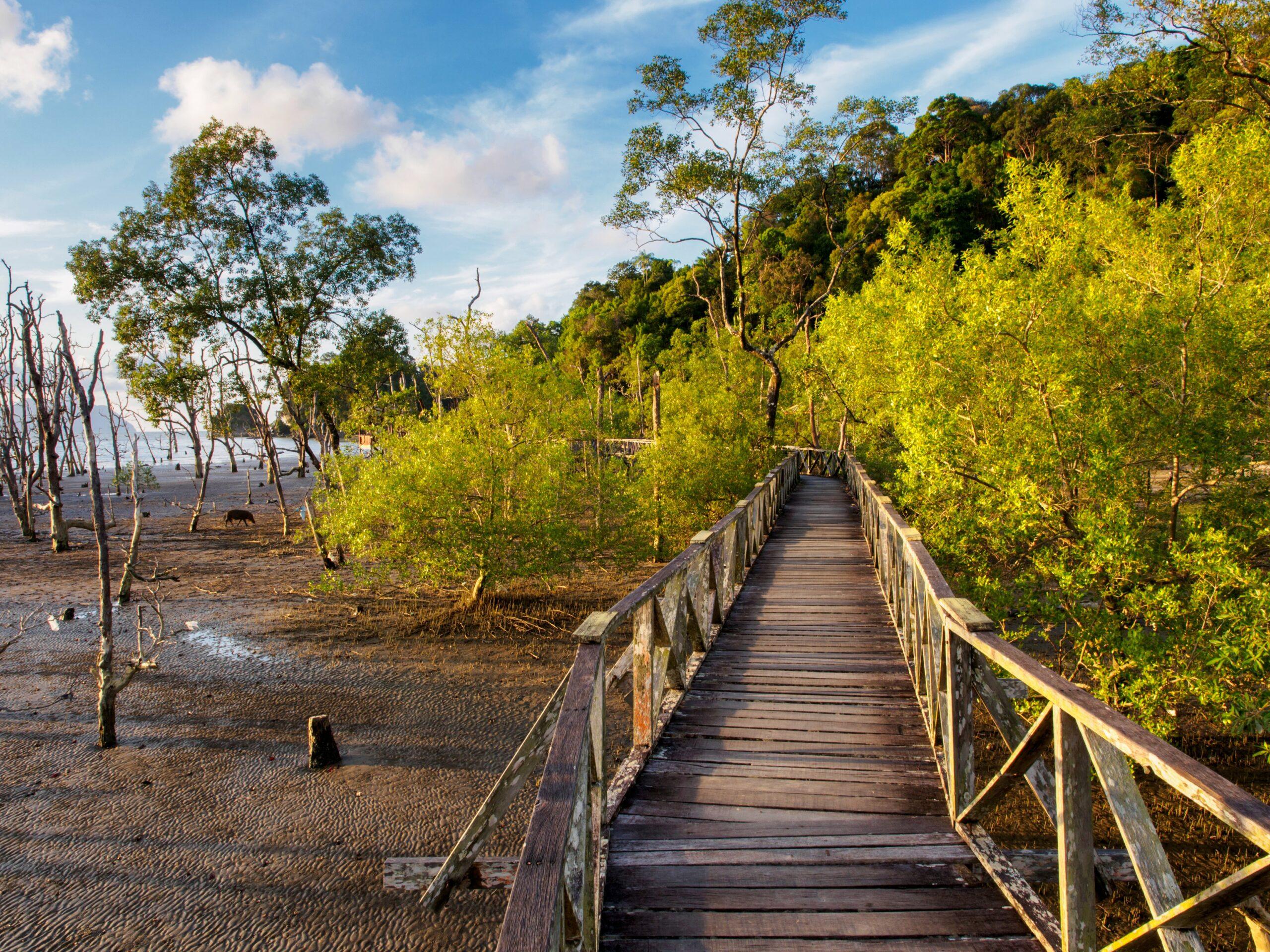 Bako national park, Borneo, Malaysia