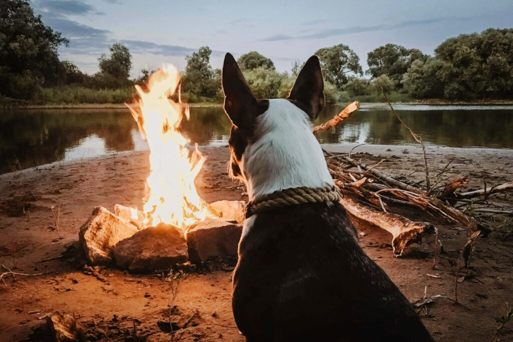 Dog by Firepit